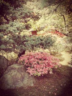 京都御所 (Kyoto Imperial Palace)/京都市, 京都府