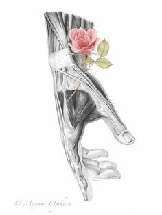 Exceptional Drawing The Human Figure Ideas. Staggering Drawing The Human Figure Ideas. Arte Com Grey's Anatomy, Human Figure Drawing, Medical Art, Ouvrages D'art, Anatomy Drawing, Human Anatomy Art, Gcse Art, Art Inspo, Amazing Art