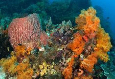 Coral reefs are the most diverse of all marine ecosystems. They teem with life, with perhaps one quarter of all ocean species depending on reefs. Coral Reef Pictures, Pokemon Terrarium, Coral Bleaching, Sea Plants, Marine Ecosystem, Ocean Scenes, Soft Corals, Underwater Life, Coral Reefs