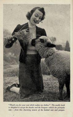 Thank you, sheep.