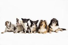 Looking for a Pooch? Don't Miss Our A-to-Z Listing of Dog Breeds