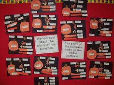 Chalk Talk: A Kindergarten Blog: Life Cycle of the Pumpkin