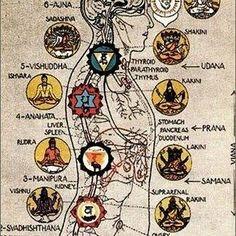 Prevenzione e Ayurveda: L'Ayurveda è la scienza che crea armonia nelle nostre vite. Dove c'è armonia, c'è salute; dove c'è disarmonia, c'è malattia. Il termine armonia, in questo contesto significa, creare una relazione armoniosa con il nostro ambiente, attraverso i nostri cinque sensi. Esporre noi stessi a gusti armoniosi (cibi ed erbe), Natura, Aromaterapia), suoni …