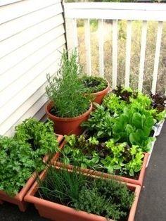 Growing a balcony vegetable garden.