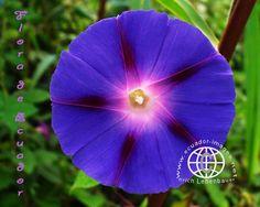 Amazon+Rainforest+Plants+and+Flowers | Flowers of Ecuador