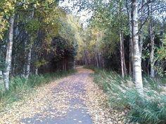 Anchorage Alaska Trail