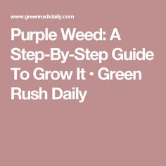 Purple Weed: A Step-By-Step Guide To Grow It • Green Rush Daily