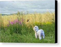 Dog And Butterfly Canvas Print by Andrea Auletta.  All canvas prints are professionally printed, assembled, and shipped within 3 - 4 business days and delivered ready-to-hang on your wall. Choose from multiple print sizes, border colors, and canvas materials.