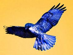 Small Blue Eagle.... matches my magic feather... coincidence??