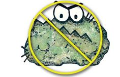 What Is Black Mold, White Mold, Mold Remediation: An Overview