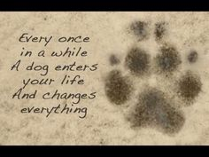 To my bbg Sky <3 Every once in a while a dog enters your life and changes everything.