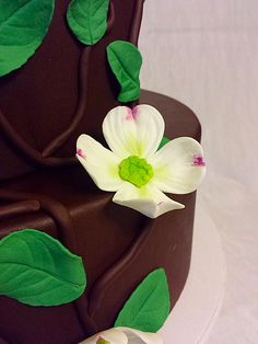 Ruff Ruff Gateaux Bakery Denver Pinterest Bakeries