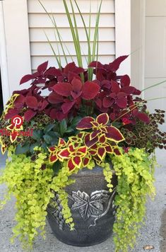 My Coleus creation for this Summer - Garten und Pflanzen - Plants Garden Yard Ideas, Garden Planters, Garden Projects, Planters For Front Porch, Front Porch Flowers, Planters For Shade, Gravel Garden, Garden Bed, Potato Vine Planters