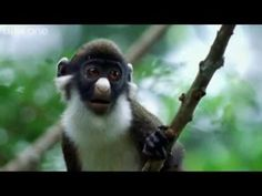 Funny Talking Animals - Walk On The Wild Side A compilation of animals with a sense of humor. Excerpts taken from the BBC One show 'Funny Talking Animals . Talking Animals, Funny Animals, Cute Animals, Funniest Animals, Wild Animals, Haha Funny, Funny Cute, Hilarious, Funny Stuff