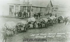 """""""Last Ox Train through Portage, 1880.""""  Portage La Prairie, Man. Freight trains like these, made up of Métis bull whackers, oxen and Red River carts, were an important source of business income for western plains Métis, particularly after the collapse of the commercial buffalo hunt, JE. THE VIRTUAL MUSEUM OF MÉTIS HISTORY AND CULTURE."""