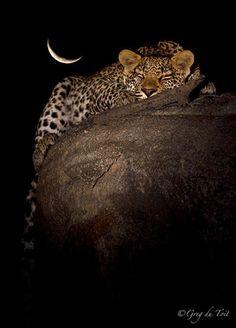 Sweet dreams...  by Greg du Toit