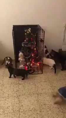 How to Cat-Proof Your Christmas Tree Funny Cats And Dogs, Cats And Kittens, Cute Cats, Funny Pets, Kitty Cats, Merry Christmas Cat, Christmas Animals, How To Cat, Cat Selfie