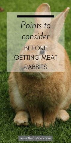 Points to Consider Before Getting Meat Rabbits - Rabbits can be a frugal way to add meat to your homestead, but before you dive in, consider these great points. #homesteading
