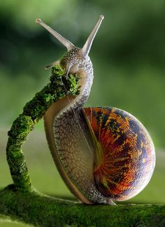 Amazing macro shot. I have an odd love of snails and slugs. This snail looks so relaxed eating his moss