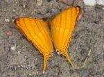 Learn About Butterflies and Moths | Children's Butterfly Website