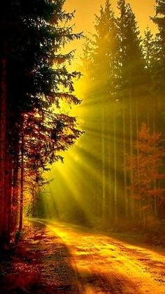 beautiful light in the forest