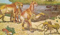 Restoration of Moropus threatening a pair of Daphoenodon, on a mural made for the US government-owned Smithsonian Museum. Prehistoric Wildlife, Prehistoric World, Prehistoric Creatures, Evolution, Alien Creatures, Nature Animals, Mammals, Horses, Drawings
