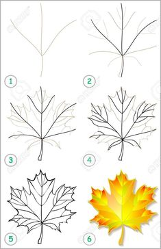 Page shows how to learn step by step to draw a maple leaf. Developing children's skills for drawing and coloring. Vector image. Stock Vector - 79892080