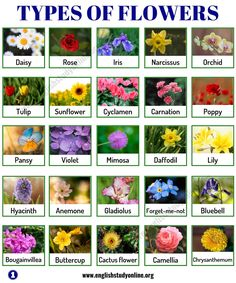 Types of Flowers: List of 50 Popular Flowers Names in English - English Study Online Pretty Flower Names, Pretty Flowers, Flowers Name List, List Of Flower Names, Names Of Flowers, Meaning Of Flowers, Flower Chart, Planting Sunflowers, Different Types Of Flowers