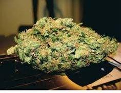 Mail order OG Kush Shatter |buy concentrates online US|Marijuana shatter Seizure Disorder, Charlottes Web, Muscle Spasms, Buy Weed Online, Herbs, Usa, Herb, U.s. States, Medicinal Plants