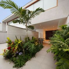 Garten Ideen - Beete aus tropischen Pflanzen