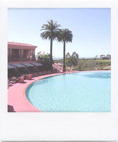pinks & palm tree paradise