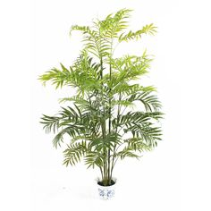 We have found quotes of bamboo planting products from bamboo planting supplilers, bamboo planting vendors and bamboo planting factories. Small Palm Trees, Plants Quotes, Bamboo Plants, Ornamental Plants, Agriculture, Plant Leaves