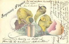 Ostern Küken ALS Studenten Bierkrug 1906 | eBay