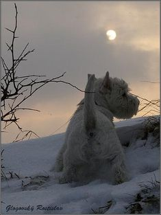 Winter Sky ~ Edward
