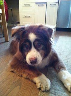 Abby 2014 Pet Memorials, Corgi, Memories, Pets, Animals, Memoirs, Corgis, Souvenirs, Animales