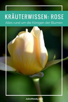 Kräuterwissen Rose