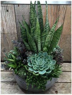 24 beauty cacti and lush garden ideas for indoors 17 - Kaktus - Cactus Succulent Arrangements, Cacti And Succulents, Planting Succulents, Succulent Gardening, Succulent Outdoor, Flower Gardening, Succulent Garden Ideas, Propagate Succulents, Succulent Planters