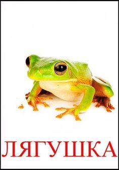 Лягушка картинка для детей Kids Education, Hilarious, Memes, Animals, Bugs, Fluffy Animals, Insects, Early Education, Animales