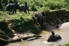"""De jeunes """"éco-guerriers"""" perchés sur des éléphants de Sumatra, en Indonésie, patrouillent dans la jungle de cette île de l'ouest de l'archipel pour lutter contre l'abattage illégal d'arbres et le braconnage dans les immenses forêts tropicales."""
