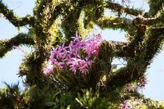 como-cultivar-orquideas-sobre-los-arboles-04