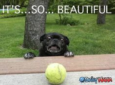 Google Image Result for http://www.dailyhaha.com/_pics/pug-is-impressed1.jpg