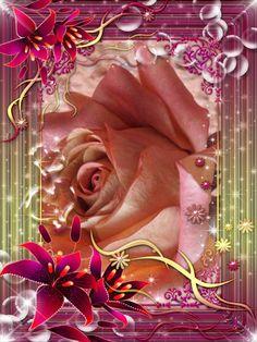 rosa di ANNA ARMINIO
