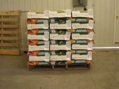 Packaging Soybeans Into Paperbags For Distribution Across Ontario