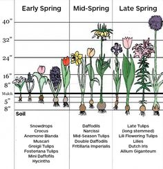 Spring Planting Chart for Bulbs