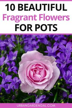 Fragrant flowers are ideal for pots and containers. Here are 10 beautiful fragrant flowers to add to your container garden. #flowers #flowergarden #containergarden Garden Sheds Uk, Garden Bar, Garden Trees, Garden Wedding, Pruning Geraniums, Roof Garden Plan, Hyacinth Flowers, Planting Flowers, Flower Gardening