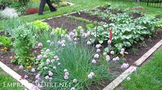 20+ Ideas for your home veggie garden  - raised beds with railway tie-style borders. Whatever wood you choose for raised beds, always make sure it's safe for food-growing beds.  Select wood that has not been treated (you do NOT want 'pressure-treated' wood), so that there's nothing that will leach into your soil over time. This is not the time to choose free treated wood over buying new untreated wood, if it comes to that. Use redwood or cedar ― both are beautiful and rot-resistant