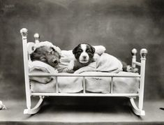 Rock-a-Bye Puppy: 1914 - puppies in rocking crib.  Vintage photo at Shorpy.