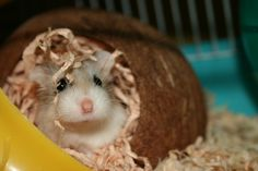 I'll be getting a cute little robo hamster when I get to Ft. Hood!
