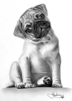 Pug Sketch. Chanel gives me this look often.