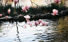 Magnolias over water Magnolia Branch, Magnolia Flower, Magnolia Tattoo, Water Images, Water Me, Favim, Magnolias, Branches, Flowers